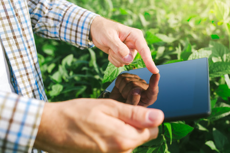 soya bean: Farmer using digital tablet computer in cultivated soybean crops field, modern technology application in agricultural growing activity, selective focus