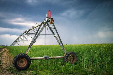 Sprinkler irrigation system in oilseed rape field on rainy day Stock Photo
