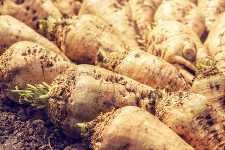 Harvested sugar beet crop root pile on the ground, selective focus Stock fotó - 65447730