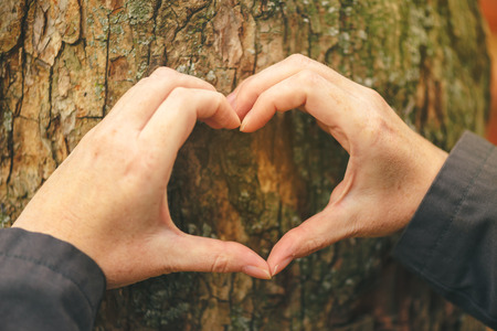 conservationist: Female hands gesturing heart shape sign on tree trunk, ecology and environment concept for nature lovers