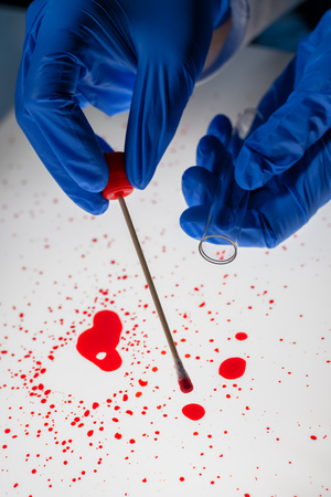 Forensic technician taking DNA sample from blood stain with cotton swab on murder crime scene