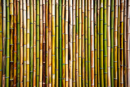 Bamboo wall texture, real natural pattern as background Imagens