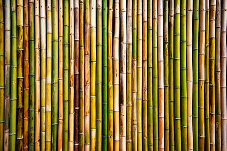 bambou: texture du mur de bambou, véritable modèle naturel en arrière-plan Banque d'images