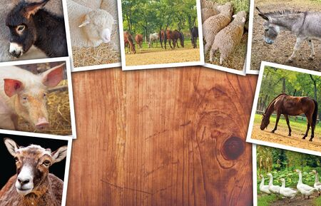 multiple: Agriculture and livestock collage, photos with various animals on wooden surface as copy space Stock Photo