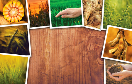 Agriculture themed collage photos with copy space - crops, farming and growth