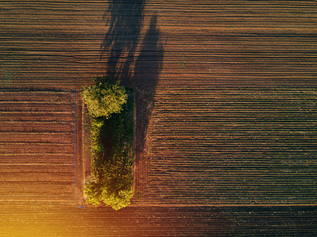Aerial view of trees in field in sunset, drone pov top view of countryside landscape