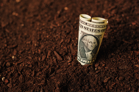 USA dollar banknotes cash money in fertile soil ground, making income in agriculture and agricultural activity like growing crops