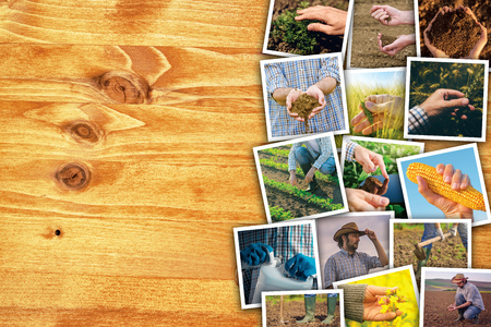 seeding: Man in farming and agriculture, photo collage with copy space of many photographs depicting male farmer working in field and garden Stock Photo