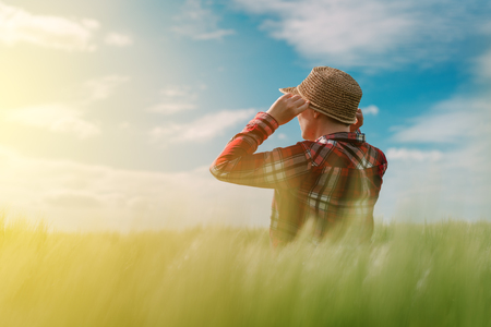 woman agronomist looking over the wheat field to the horizon on a windy day Stock Photo