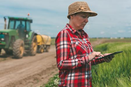 cultivo de trigo: La agricultura inteligente, utilizando la tecnología moderna en la actividad agrícola, agricultora agrícola agrónomo con ordenador de tableta digital utilizando aplicaciones móviles en el campo de cultivos de trigo, el tractor con el rociador de cultivos en el fondo