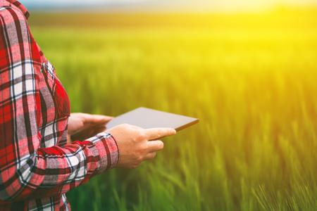 小麦畑、エレクトロニクスを用いた近代的なスマート農業の概念でタブレットを使用して農家の女性 写真素材