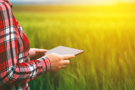 Female farmer using tablet in wheat crop field, concept of modern smart farming by using electronics