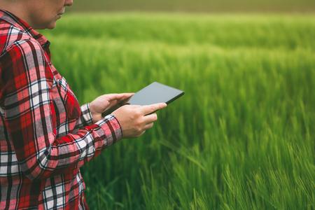 cultivo de trigo: Mujer agricultor utilizando equipo de tableta en el campo de cultivo de trigo, el concepto de la agricultura inteligente moderno mediante el uso de la electrónica, la tecnología y las aplicaciones móviles en la producción agrícola Foto de archivo