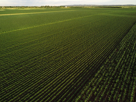 cultivated: Cultivated field from drone point of view, countryside landscape aerial view