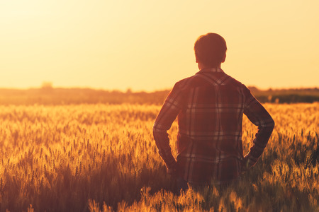 Farmer in ripe wheat field planning harvest activity, female agronomist looking at sunset on the horizon Archivio Fotografico