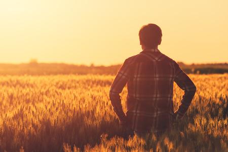 Farmer in ripe wheat field planning harvest activity, female agronomist looking at sunset on the horizon Standard-Bild