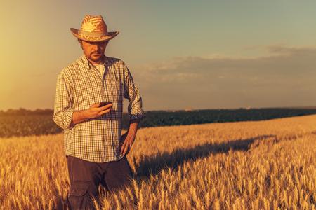 Retro getönten Bild der agronomistischen Landwirt mit Handy in reifen Weizen Getreide Feld Standard-Bild - 80807572