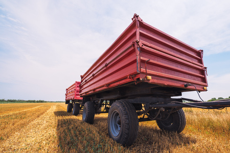 harvested: Agricultural tractor trailer in harvested wheat field