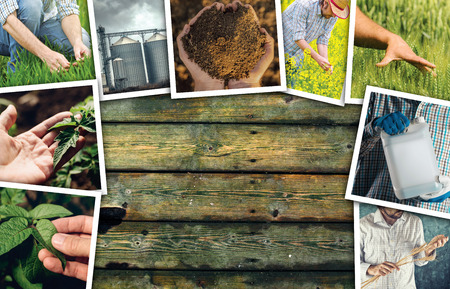 Man in farming and agriculture, photo collage with copy space of many photographs depicting male farmer working in field and garden Stock Photo