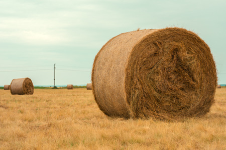 Rolls of hay, haystack bales in countryside landscape on cloudy day