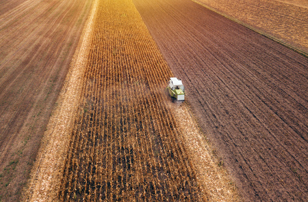 Corn maize harvest, aerial view of combine harvester working on ripe maize crop field from drone pov Stock fotó