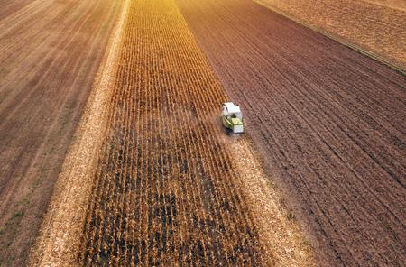 Raccolto di mais mais, veduta aerea della mietitrebbia lavorando su campo di mais maturo raccolto da drone pov Archivio Fotografico - 88177443
