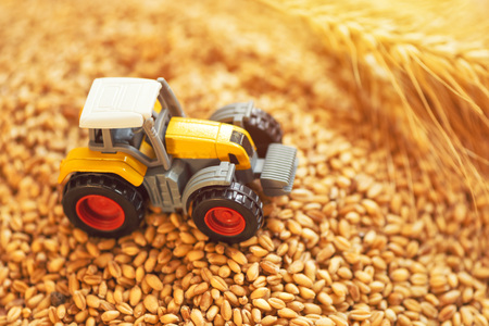 Agricultural tractor toy and harvested wheat grains, selective focus