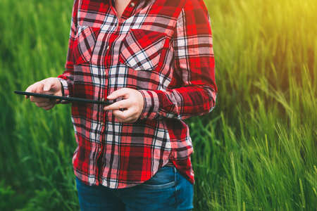 Female farmer using tablet computer in wheat crop field, concept of modern smart farming by using electronics, technology and mobile apps in agricultural production Stock Photo