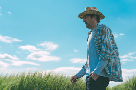 Male farmer walking through cultivated wheat field and examining growth of the crops on windy day Stock Photo