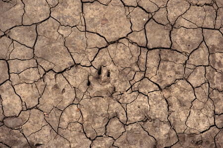 Cracked dry soil ground texture for drought season background