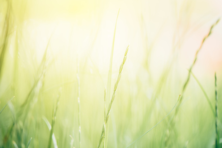 Abstract blur springtime background with defocused grass Stock Photo