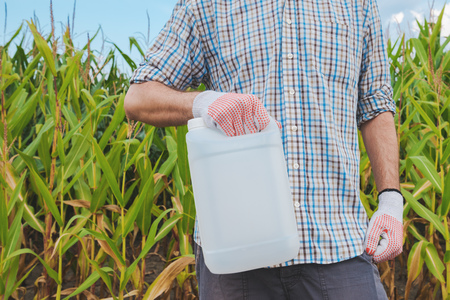 Farmer holding pesticide chemical jug in cornfield. Blank unlabelled bottle as mock up copy space for herbicide, fungicide or insecticide used in corn crop farming.