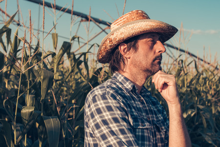 Confident serious agronomist portrait in corn field, looking determined and thoughtful