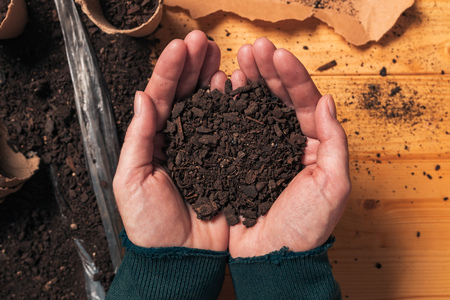 Gardener holding soil in cupped hands, top view of female organic food producer handful of humus for growing plants Foto de archivo