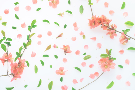 Colorful springtime floral decoration flat lay top view with vibrant flower petals and leaves Stock Photo