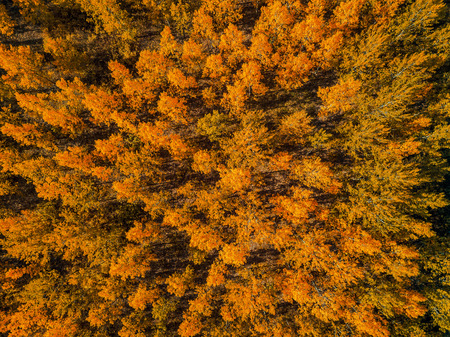 Aerial view of beautiful forest in autumn, indian summer scenery from drone point of view