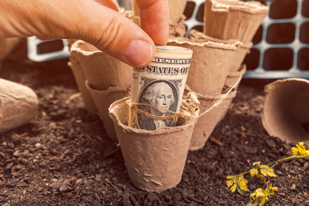 Biodegradable peat pot soil containers and US dollar banknotes, making money and profit in locally grown organic food production Imagens