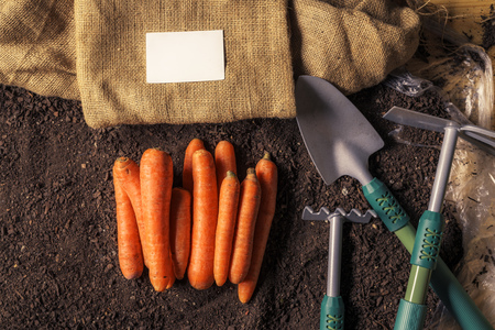 Organic carrot growing business card mock up with harvested root vegetable on garden soil