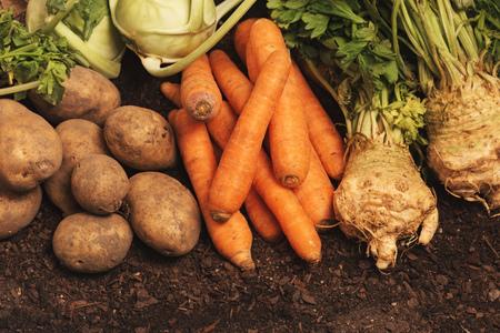 Organic homegrown produce pile - potato tubers, carrot, celery and kohlrabi vegetables Stock Photo