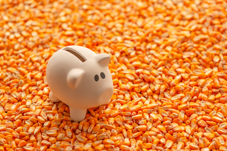 Piggy bank on pile of harvested corn seed with copy space as conceptual image for financial savings and retirement plan in agriculture and farming business