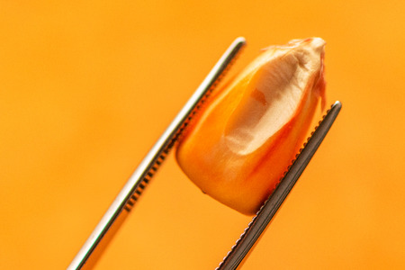 Scientist examining quality of harvested corn seed kernels, close up of hand holding single grain with tweezers