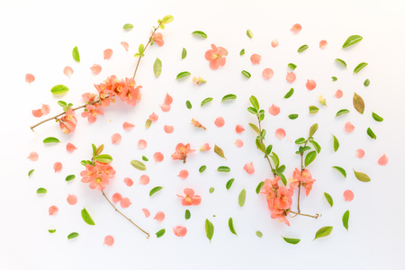 Colorful springtime floral decoration flat lay top view with vibrant flower petals and leaves Reklamní fotografie