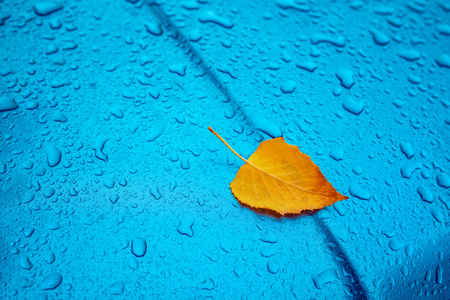 Autumn season cliche with copy space, dry yellow birch leaf and rain water droplets on blue metal surface
