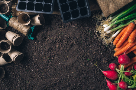 Organic homegrown produce and gardening equipment with copy space, top view of greenhouse peat soil Reklamní fotografie