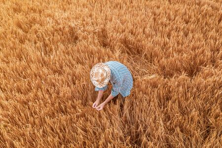 Aerial view of farmer standing in ripe wheat crop field. Adult male agronomist examining plantation ready for harvesting season from drone point of view Foto de archivo