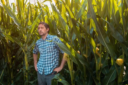 Confident corn farmer posing in field. Portrait of handsome adult male agronomist in cultivated maize crop plantation.