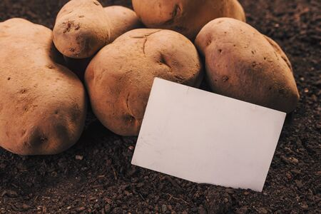 Organic potato tuber and business card mock up ob vegetable garden soil