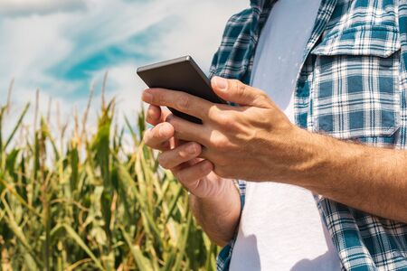 Agronomist typing text message on smartphone out in corn field on bright sunny summer day, using modern technology for communication in agriculture, close up of hands