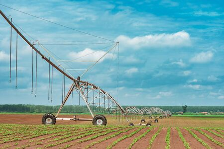 Pivot irrigation system in cultivated soybean and corn field, agricultural equipment for watering crops Stockfoto