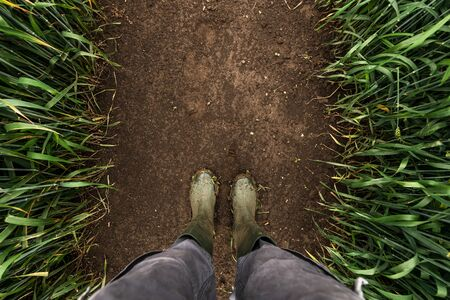 Farmer standing in wheat field, top view of rubber boots on muddy soil Banco de Imagens